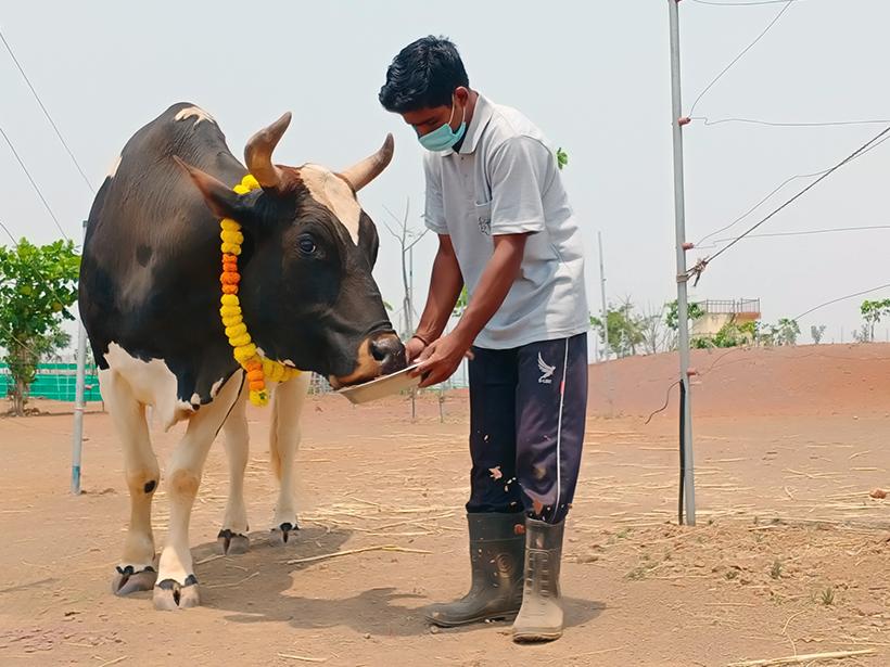 Bandya celebrates a holiday at one of Animal Rahat's sanctuaries.