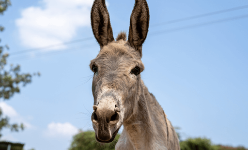 Work in the Local Community Improves the Lives of Donkeys