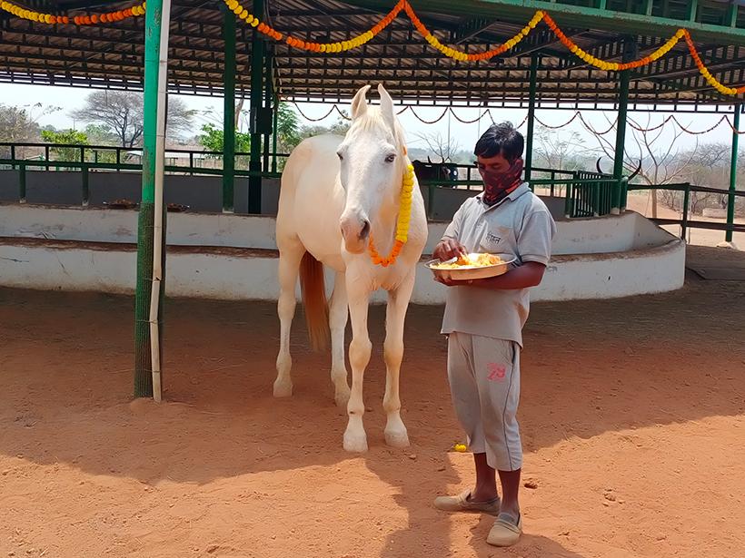 Akshay celebrates a holiday at one of Animal Rahat's sanctuaries.