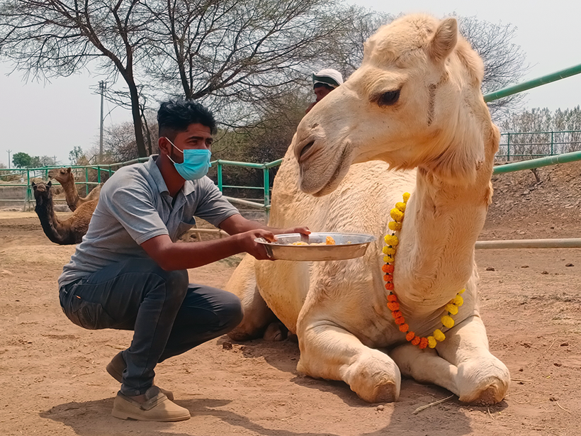 Bhuriya celebrates a holiday at one of Animal Rahat's sanctuaries.