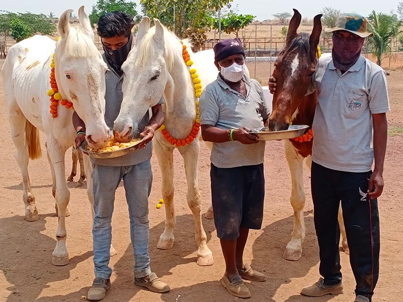 Badal, Pari, and Kiran celebrates a holiday at one of Animal Rahat's sanctuaries.