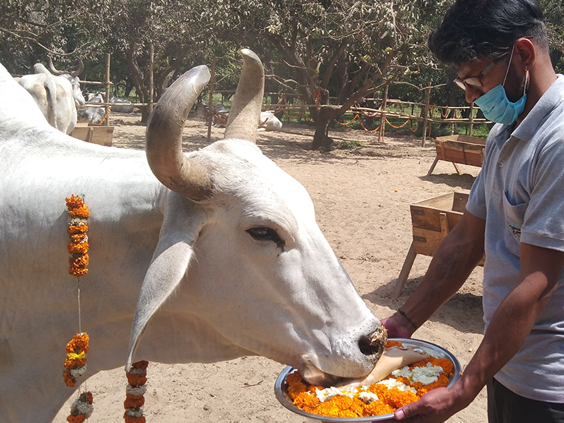 Dany celebrates a holiday at one of Animal Rahat's sanctuaries.