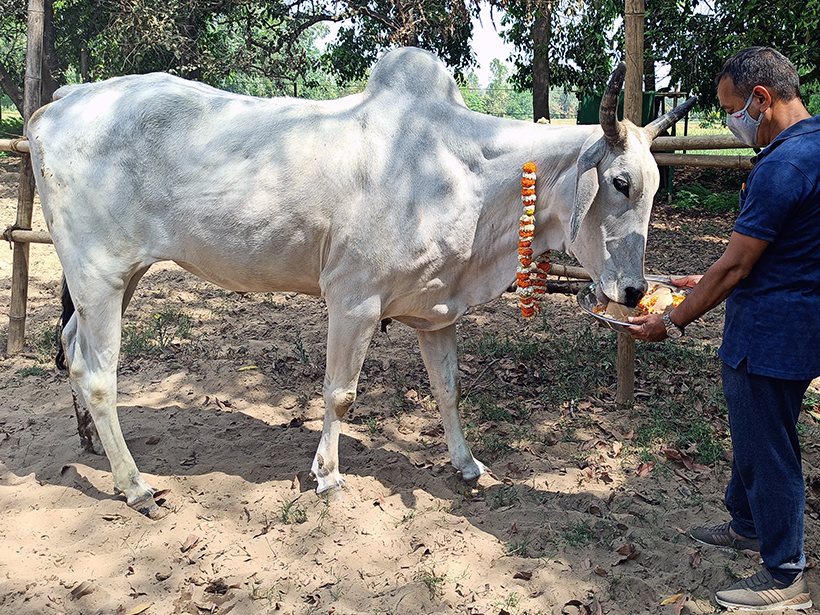 Dodo celebrates a holiday at one of Animal Rahat's sanctuaries.