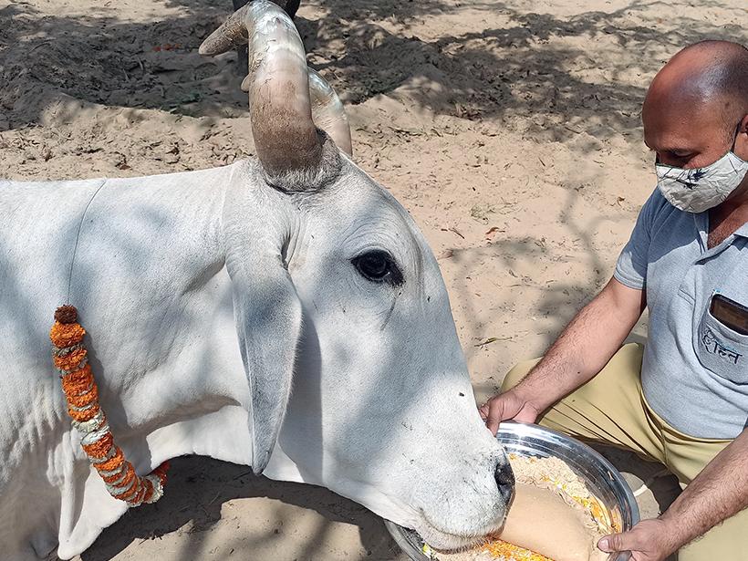 Gabbar celebrates a holiday at one of Animal Rahat's sanctuaries.