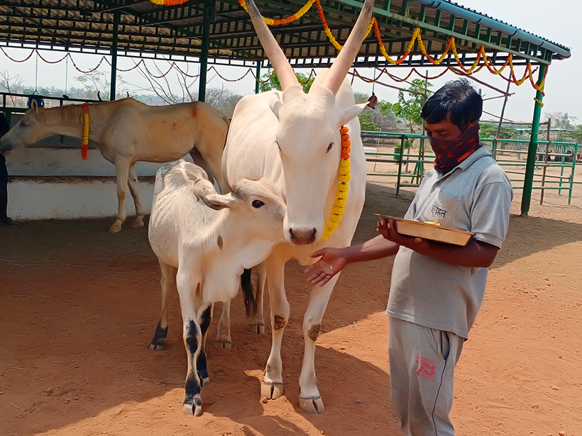 Hiren and Vitthal celebrates a holiday at one of Animal Rahat's sanctuaries.