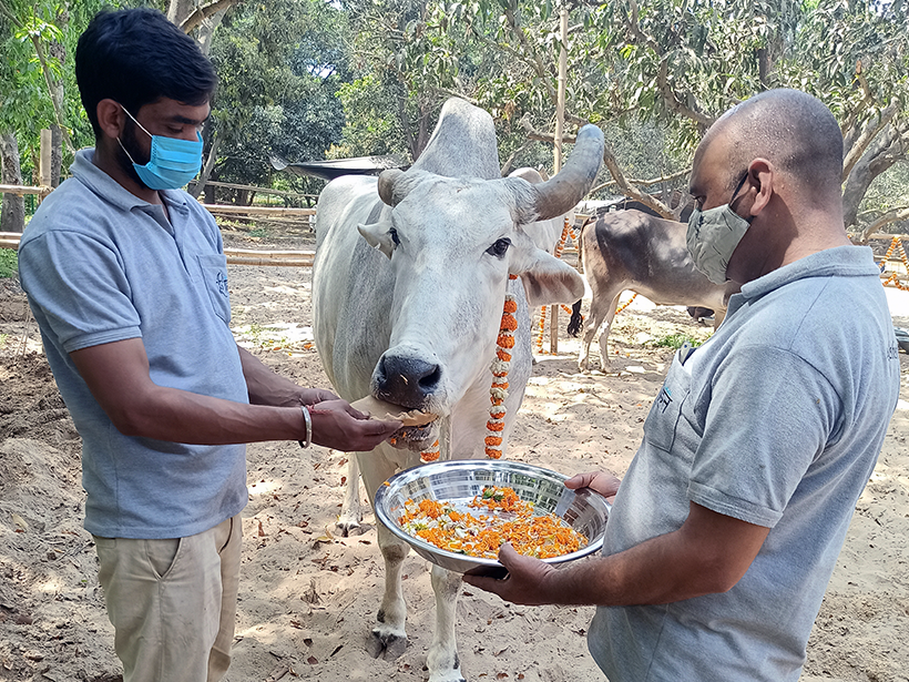 Jai celebrates a holiday at one of Animal Rahat's sanctuaries.