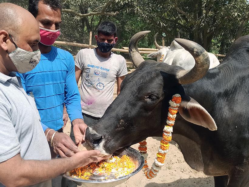 Kalu celebrates a holiday at one of Animal Rahat's sanctuaries.