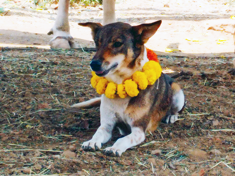 Ravi celebrates a holiday at one of Animal Rahat's sanctuaries.