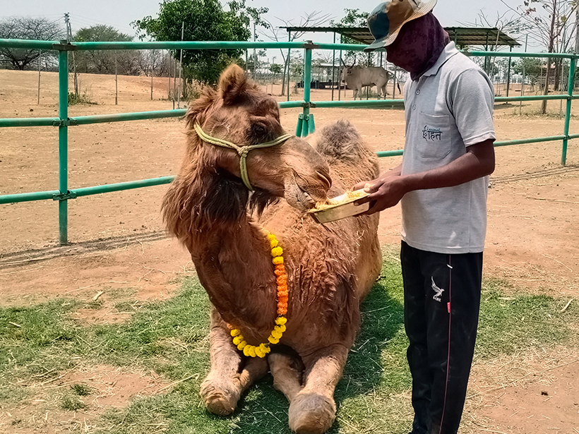 Tracy celebrates a holiday at one of Animal Rahat's sanctuaries.