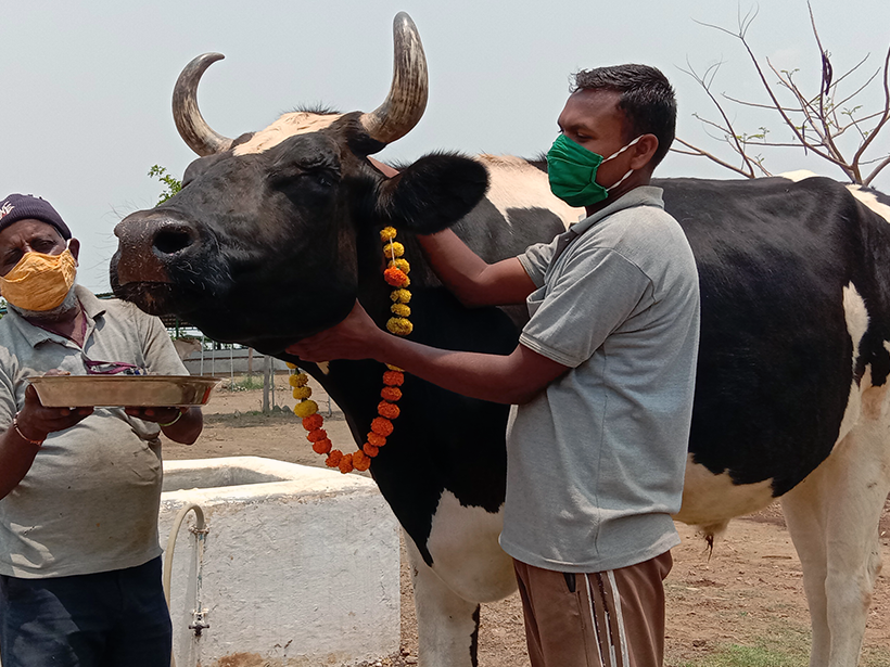 Lakhan celebrates a holiday at one of Animal Rahat's sanctuaries.
