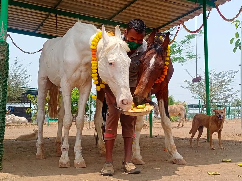 Pari and Kiran celebrates a holiday at one of Animal Rahat's sanctuaries.