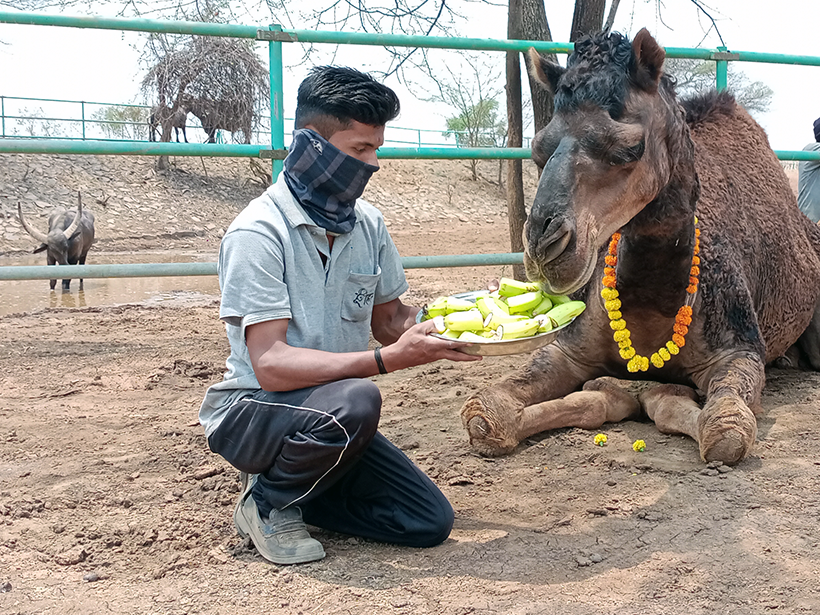 Sameer celebrates a holiday at one of Animal Rahat's sanctuaries.