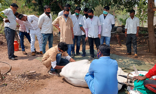 Veterinary Students Get Lessons From Animal Rahat