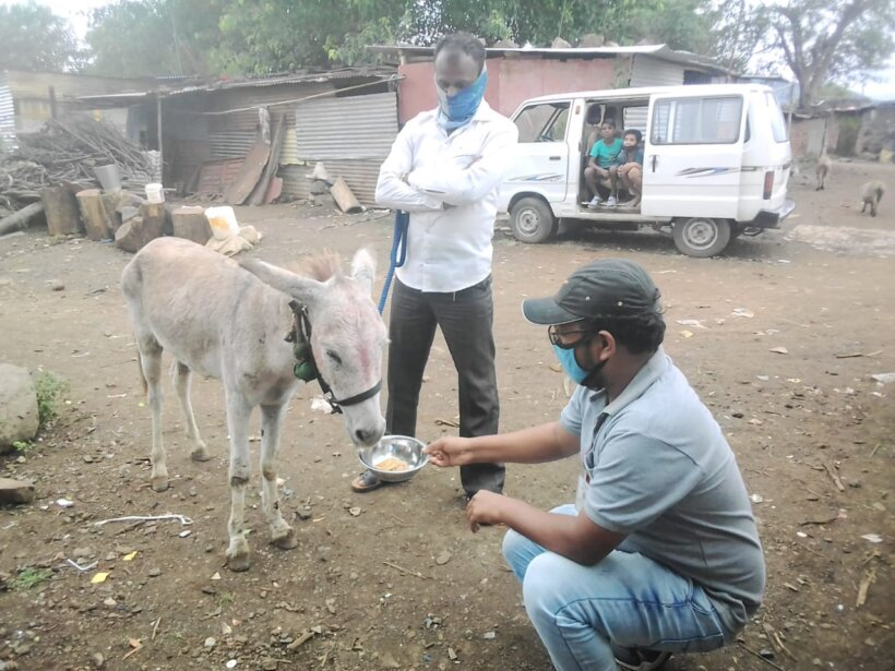 One of Animal Rahat's experts offers a donkey a treat.