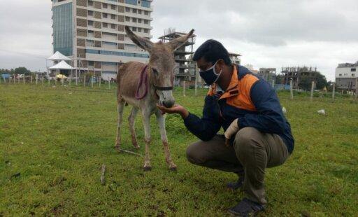 Donkey Treats Delight and Build Trust