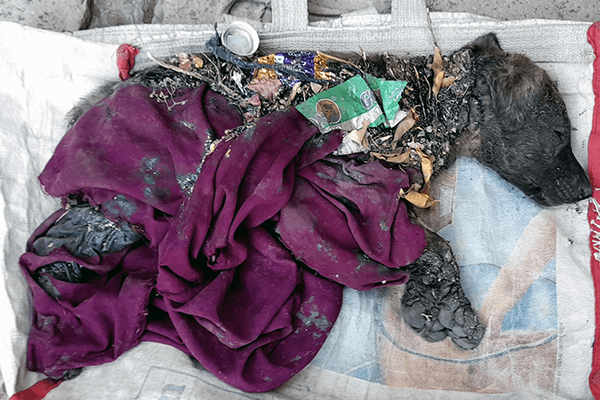 A puppy is covered with tar, clothes, and other debris.