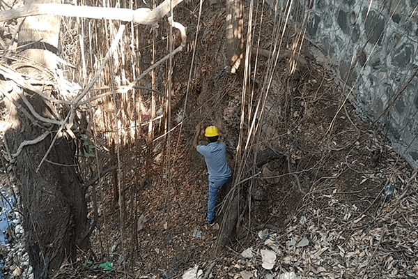 An experienced climber on Animal Rahat's staff slowly climbs down to the bottom of the well using the trees and vines to lower himself safely.