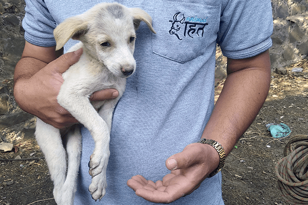 Animal Rahat's staff member holds Vasur after he was pulled up from the well.
