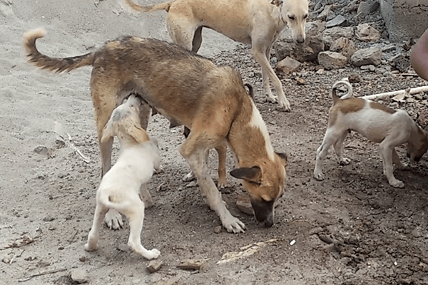 Animal Rahat reunited Vasur with his mother and siblings.