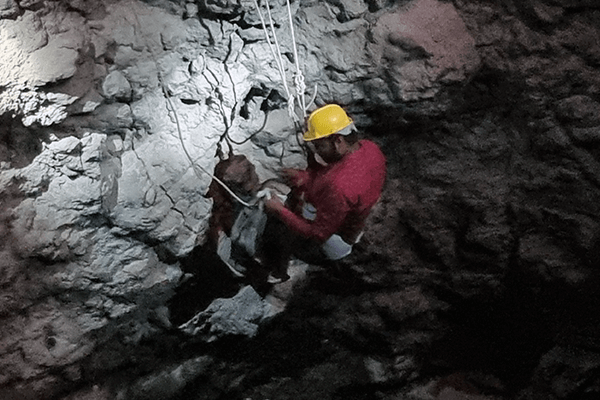 A rescue worker for Animal Rahat rappels down a deep well in the dark to rescue two Indian rat snakes.