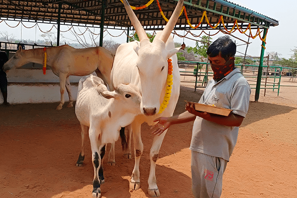 Vitthal affectionately snuggles with Hiren as they enjoy special treats for the Holi holiday.