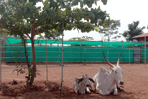 Hiren and Vitthal relax together, sitting in the same position, under a tree.