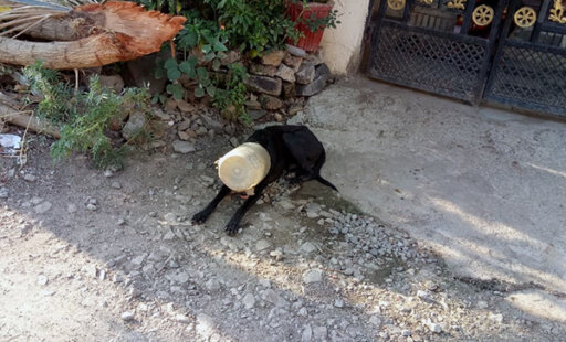 Rescued: See Where This Dog's Head Was Stuck!