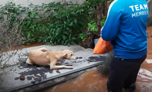 BREAKING: Saving Animals From Rising Floodwaters