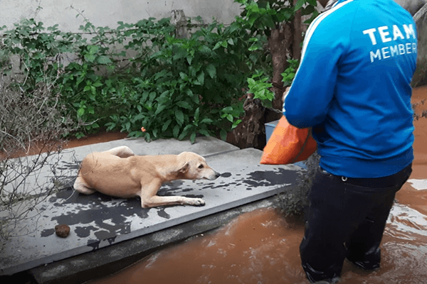 A group of Animal Rahat rescue workers heard this dog's desperate cries and followed the sound to where she was stranded.