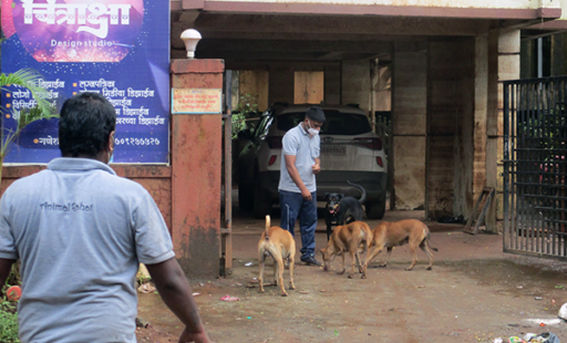 UPDATE: Wrapping Up Emergency Work for Animals in Raigad