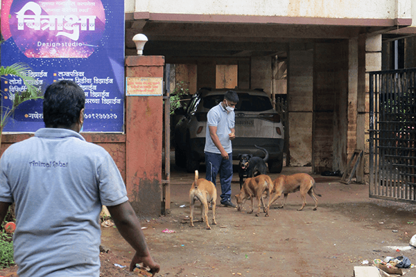 Animal Rahat's team fed dogs in the Raigad district after flooding and evacuations cut off their food supply.