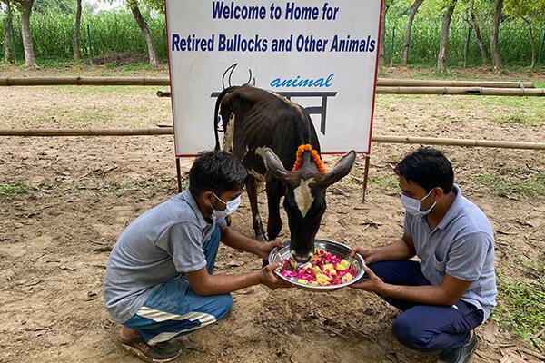 Bajrangi is welcomed to Animal Rahat's sanctuary.
