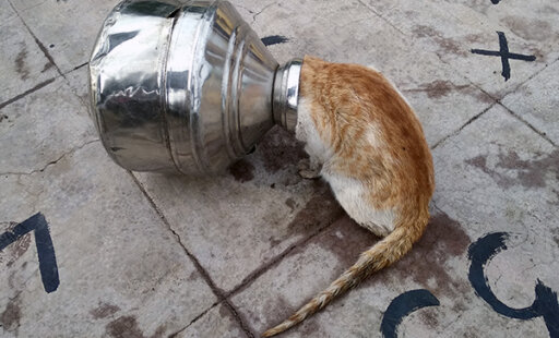 Trapped Cat's Cries for Help Are Answered