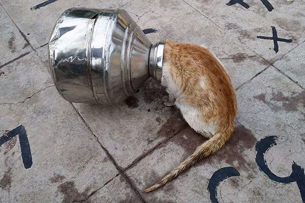 Hoping to grab a morsel of food from this pot, a cat got his head stuck.