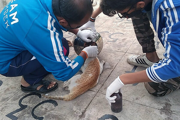 Animal Rahat's rescue team gently frees the cat from the pot.
