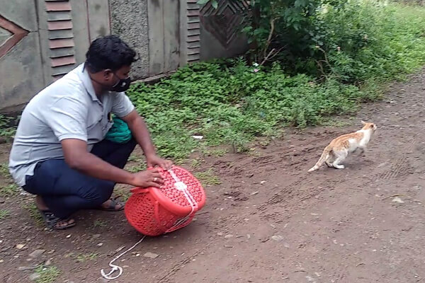 The team releases the cat after sterilizing and feeding him.