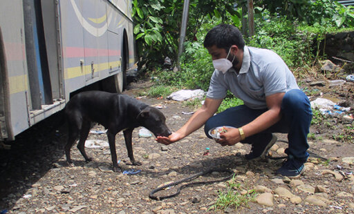 Helping Starving Dogs in Raigad
