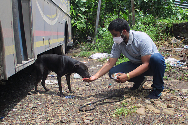 Dogs in Raigad eagerly devour the food that Animal Rahat is providing them.