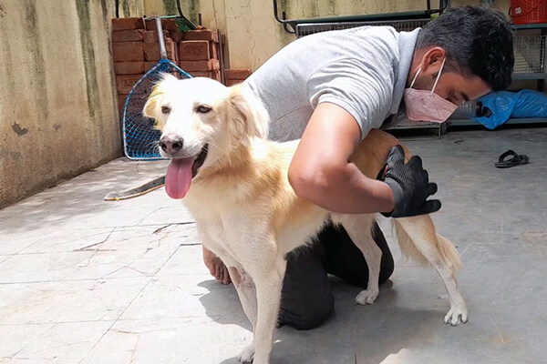 Sam is happy as Animal Rahat's staff affectionately grooms him.