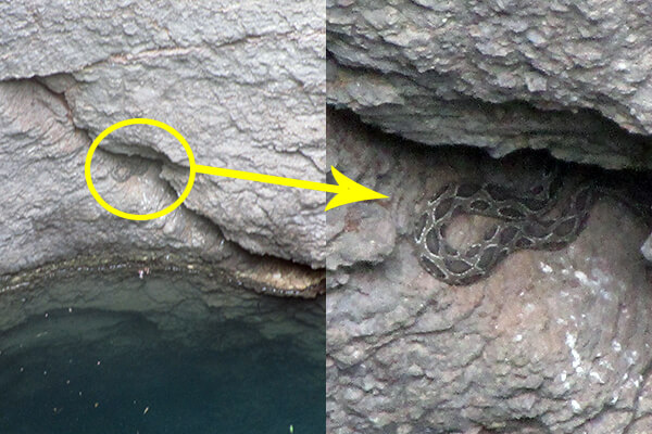 An unsuspecting snake tumbled to the bottom of this 80-foot-deep well.