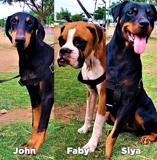 John, Faby, and Siya are enjoying life at Animal Rahat's sanctuary in Sangli.