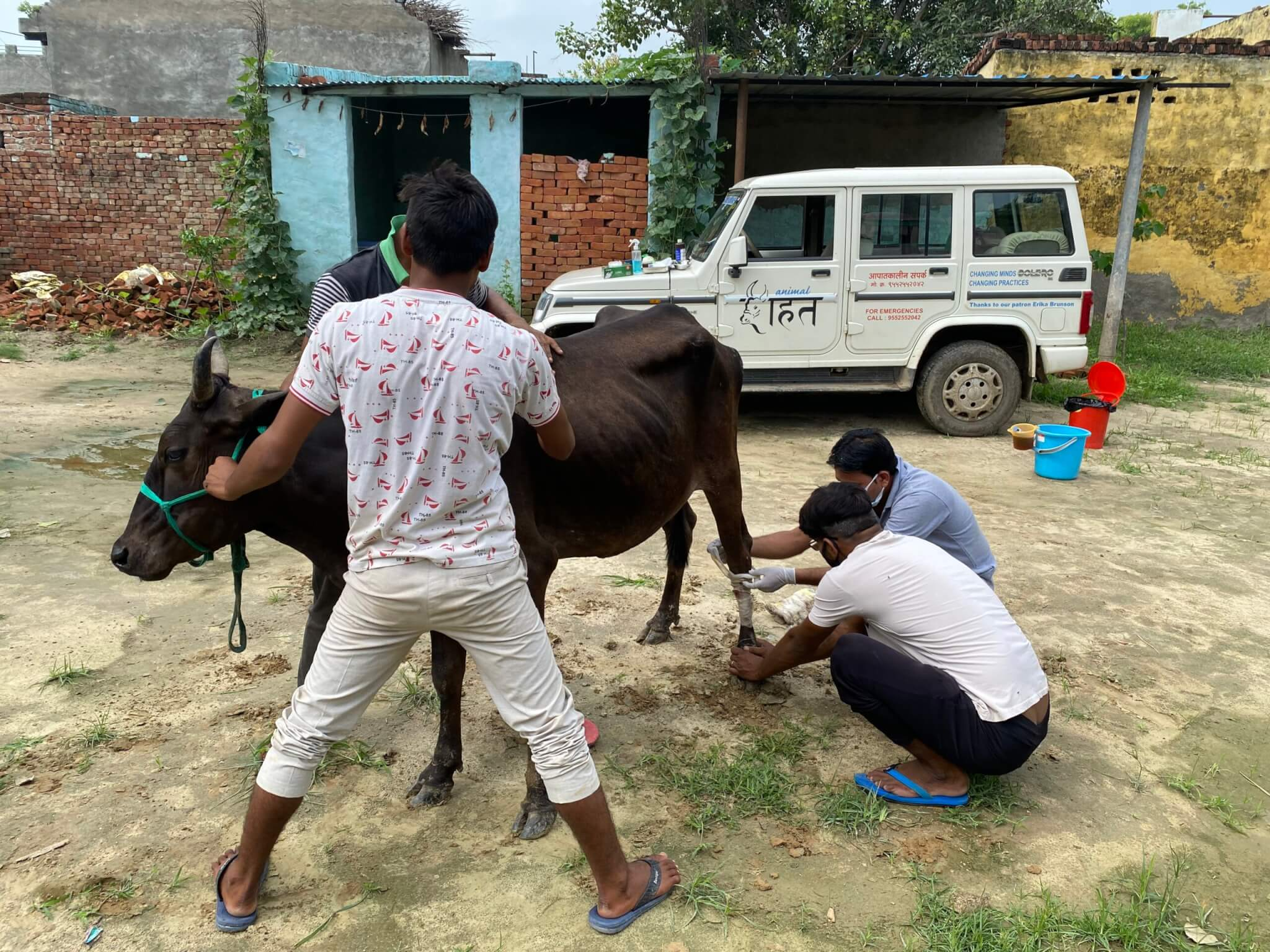 Ganga likely had an unfortunate tussle with barbed wire fencing that left painful, open wounds on her legs.