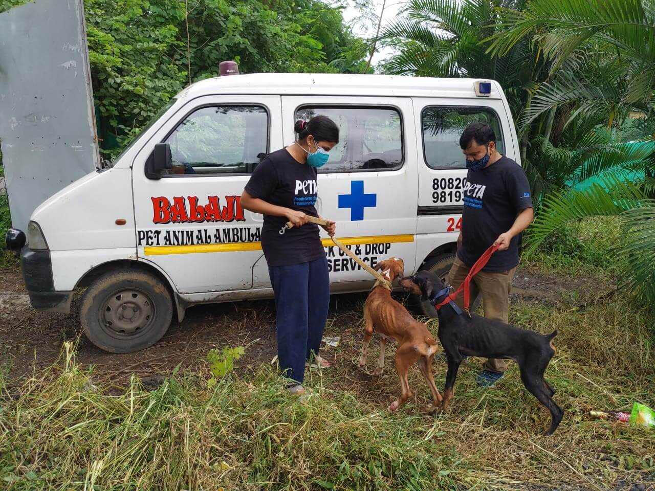 PETA India loads the dogs into an ambulance that will take them to Animal Rahat's sanctuary in Sangli.
