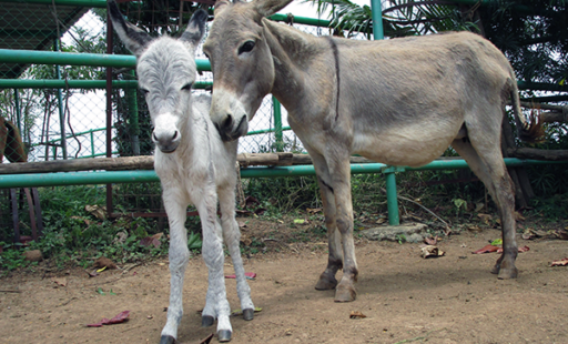 These Donkey Foals Are Everything